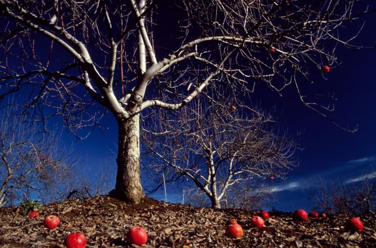 apple-does-not-fall-far-from-the-tree-122513144-5c49d069c9e77c00010322b7